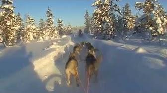 Tundra Huskies Köngäs Levi Lapland