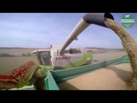 agriKULTUR: Yannik - Weizen und wie er geerntet wird