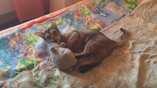 Кошка дерется с крысой игрушечной