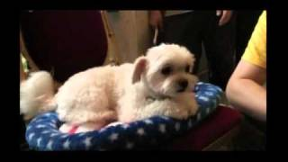 『犬とあなたの物語 いぬのえいが』「お母さんは心配症」メイキング2