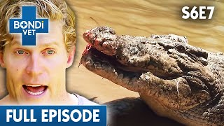 checking-a-wild-caught-snake-s06e07-bondi-vet