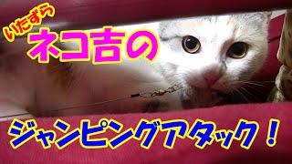 いたずら猫が再び飛び降り‥ドラ吉、死す!? Dora-kichi, a mischievous cat flying off again... Dora-kichi being dead!? thumbnail
