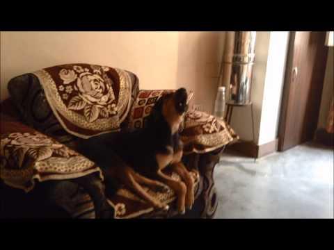 Guru The Singing Dog