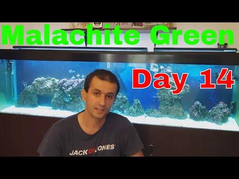 Malachite Green And Metronidazole Treatment Reef Aquarium Day 14 Update