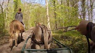 Balade en forêt avec la GoPro
