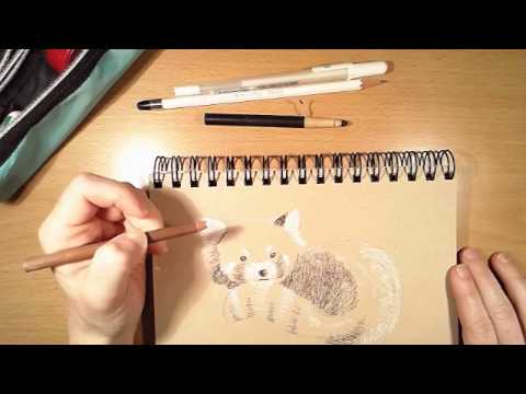 "Studio Mikarts - Red Panda Sketches - Live Art by Denise ""みか"" Hutchins"