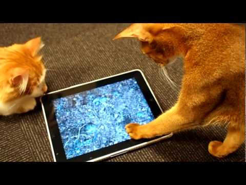 Shooting fish ifish pond hd ipad app youtube for Koi pond app