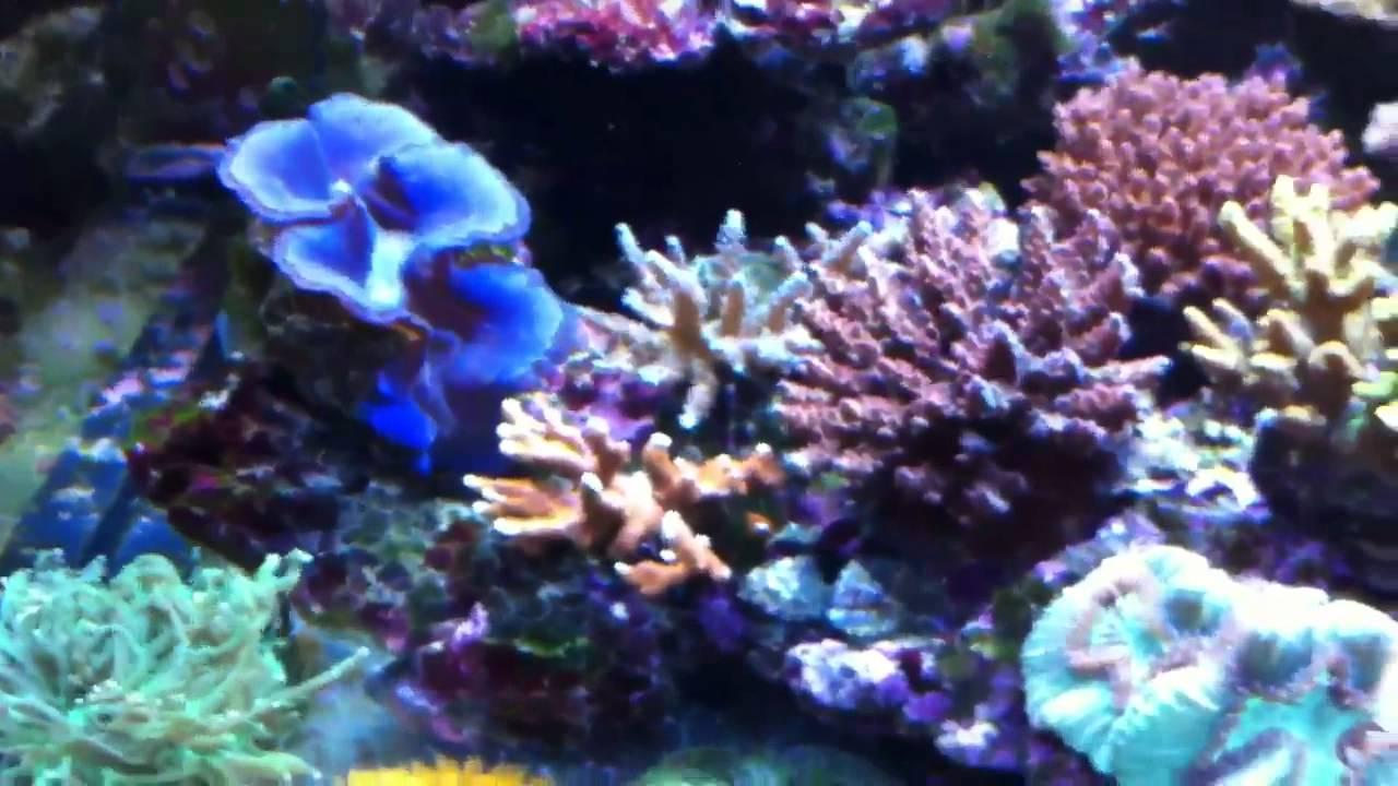 Acquario marino reef youtube for Acquario 250 litri