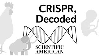 What is CRISPR and how does it work?