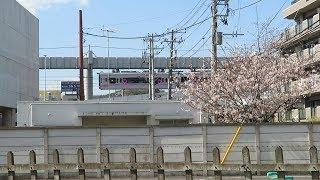 湘南モノレール・桜とモノレール3(Shonan Monorail)
