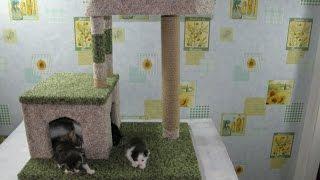 Город для котят. Квартира для котов с когтеточкой. Сделай сам .