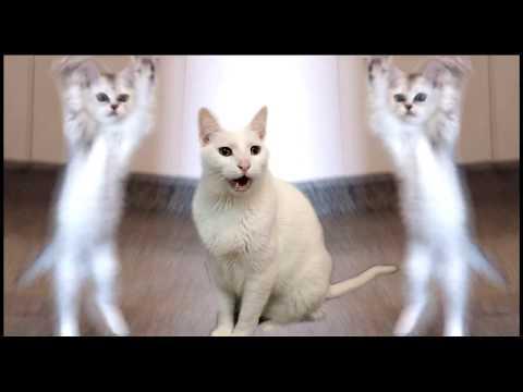 Cats Sing Hokey Pokey - Cats Version - Singing Cats