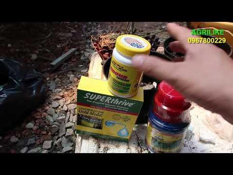 Cách trồng lan giả hạc. sử dụng phân thuốc cho lan mới trồng