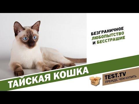 TEST.TV: Тайская кошка найдите десять отличий.