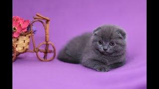 Приучаем к лотку три  недели котятам.