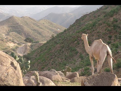 Beautiful Eritrean Landscape Sites and Sounds of Eritrea Tourism