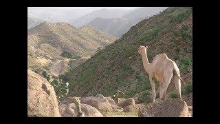 Beautiful Eritrean Landscape Sites and Sounds of Eritrea Tourism