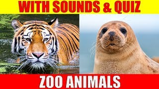 ZOO ANIMAL PICTURES With Sounds and Names for Babies & Toddlers - Animal Quiz