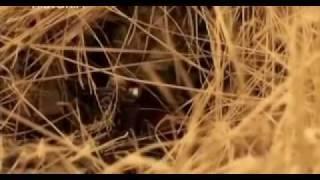 Repeat youtube video Kalina Krasnaja - radziecki snajper