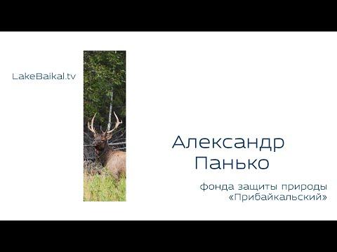 Александр Панько - Председатель Иркутского регионального фонда защиты природы «Прибайкальский»
