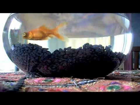 gold fish bowl -  http://Worldlingalive.com