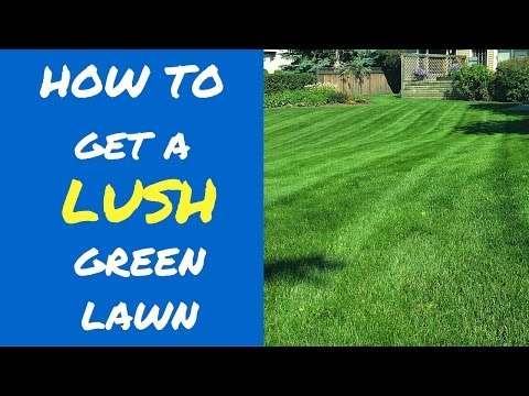 5 Tips To A Lush Green Lawn