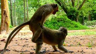 Monkey Xxx
