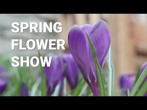 Spring Flower Show at Como Park Zoo and Conservatory's Sunken Garden