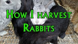 How to Harvest a Rabbit
