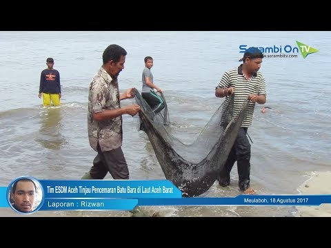 Tim ESDM Aceh Tinjau Pencemaran Batubara di Laut Aceh Barat