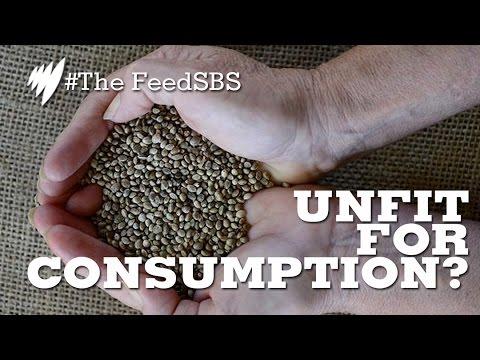 Hemp Seed: The New Superfood? I The Feed