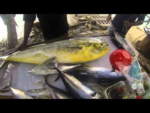 Rarotonga - Captain Moko Fishing Charter & Mooring Fish Cafe 2015