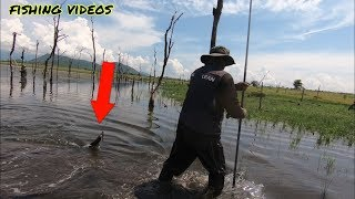 Awesome Fishing Technique - Cambodian Traditional Technique Fish By Fishing Vlog # 57