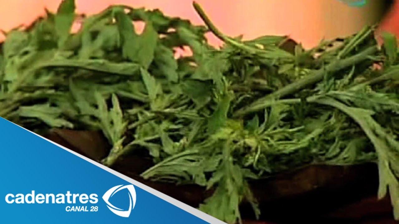 Altamisa y sus propiedades medicinales encuentro for Planta decorativa propiedades medicinales