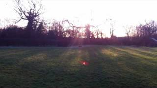 Gundog Training To The Stop Whistle With Blind Directional Retrieves - Gundog-training4u.co.uk