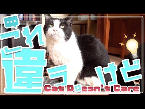 猫の「これ違う。けど」