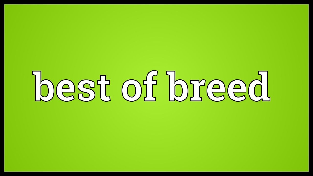 Breed is ... Meaning 80