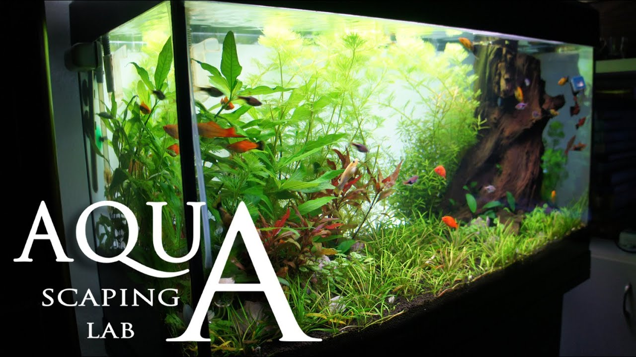 Aquascaping Lab Tutorial Natural Rich Mix Tank Wood Style Size 80 Ziolite Aquarium Dan Aquascape X 35 45h 120 L Part 2 Youtube