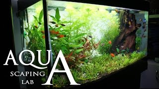 Aquascaping Lab - Tutorial Natural Rich Mix Tank Wood Style (size 80 X 35 X 45h 120 L) Part 2