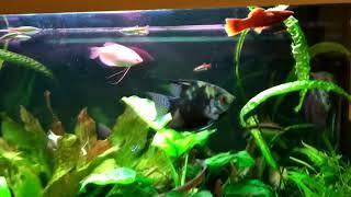 Интерактивный аквариумный туризм Сезон 4 Выпуск 20 Я его спрашиваю, а где моя задумка?(с)