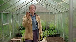 Greenhouse Gardening Tips For Growing Tomatoes