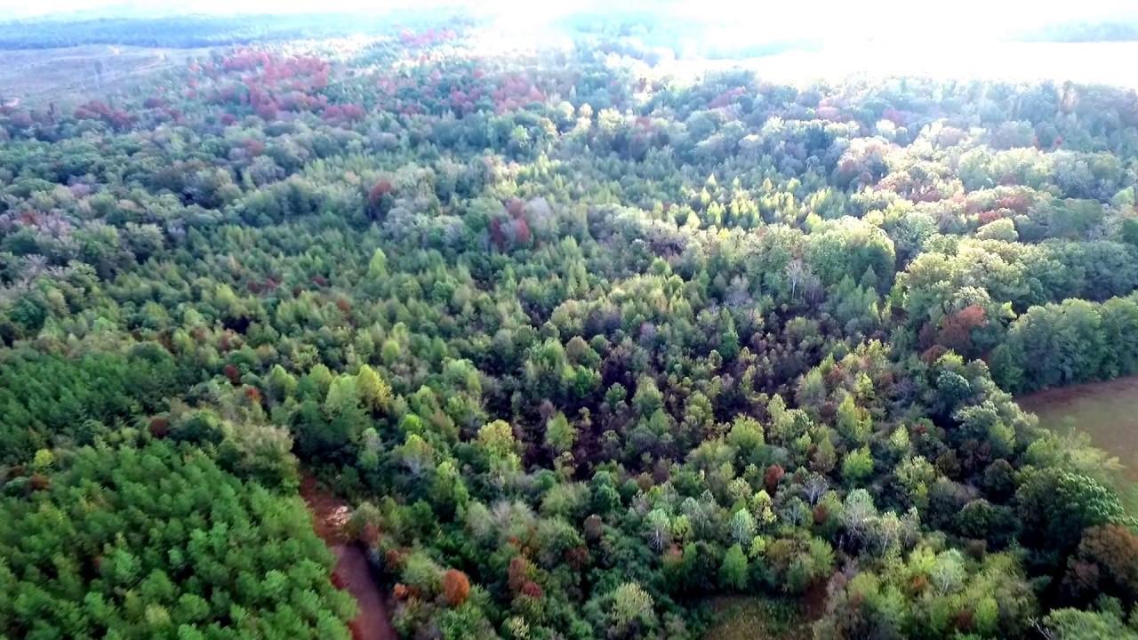 Lamar County, AL +/-102 Acres - YouTube