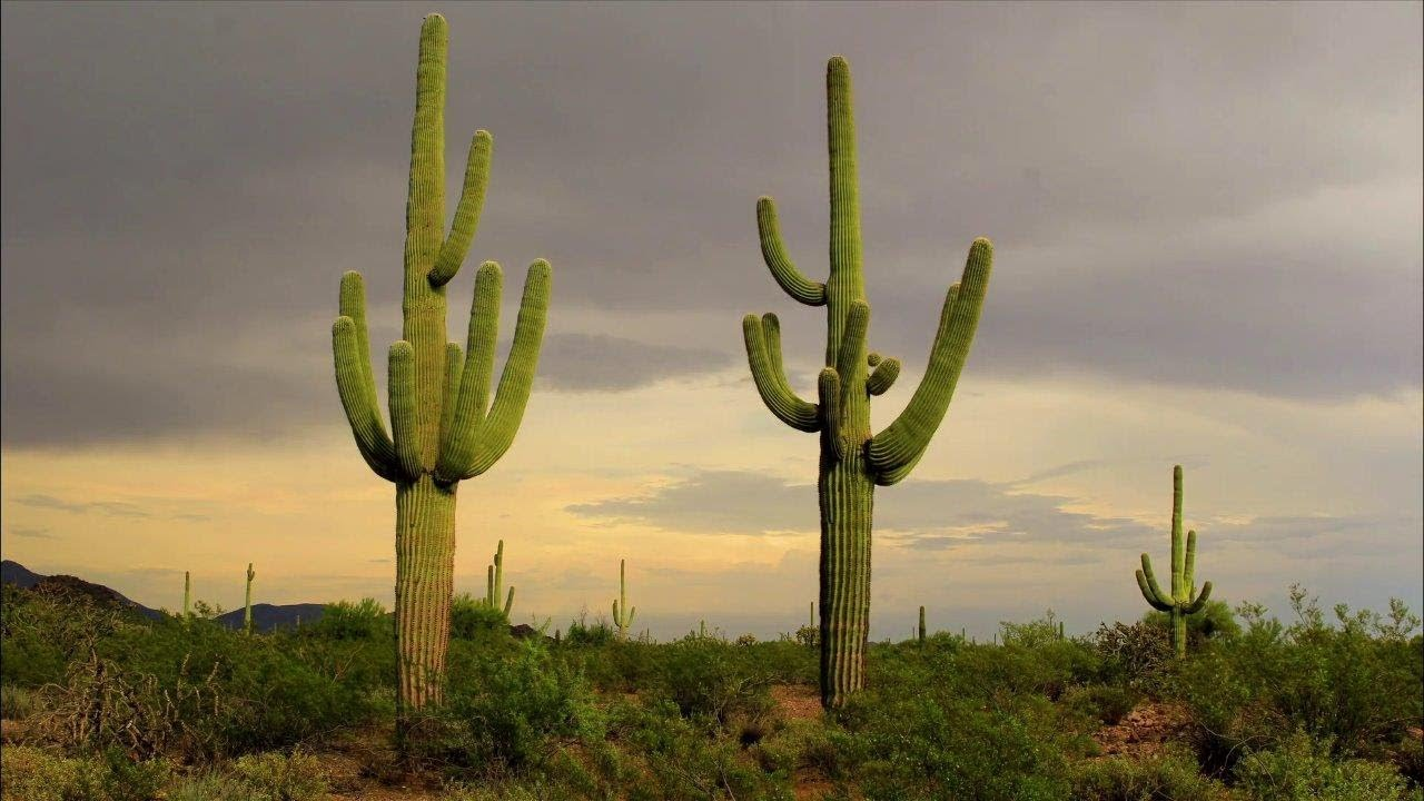 Amazing Cacti And Succulents World S Most Spectacular Plants
