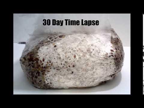 30 Day 5Grain Spawn Bag Time Lapse - YouTube