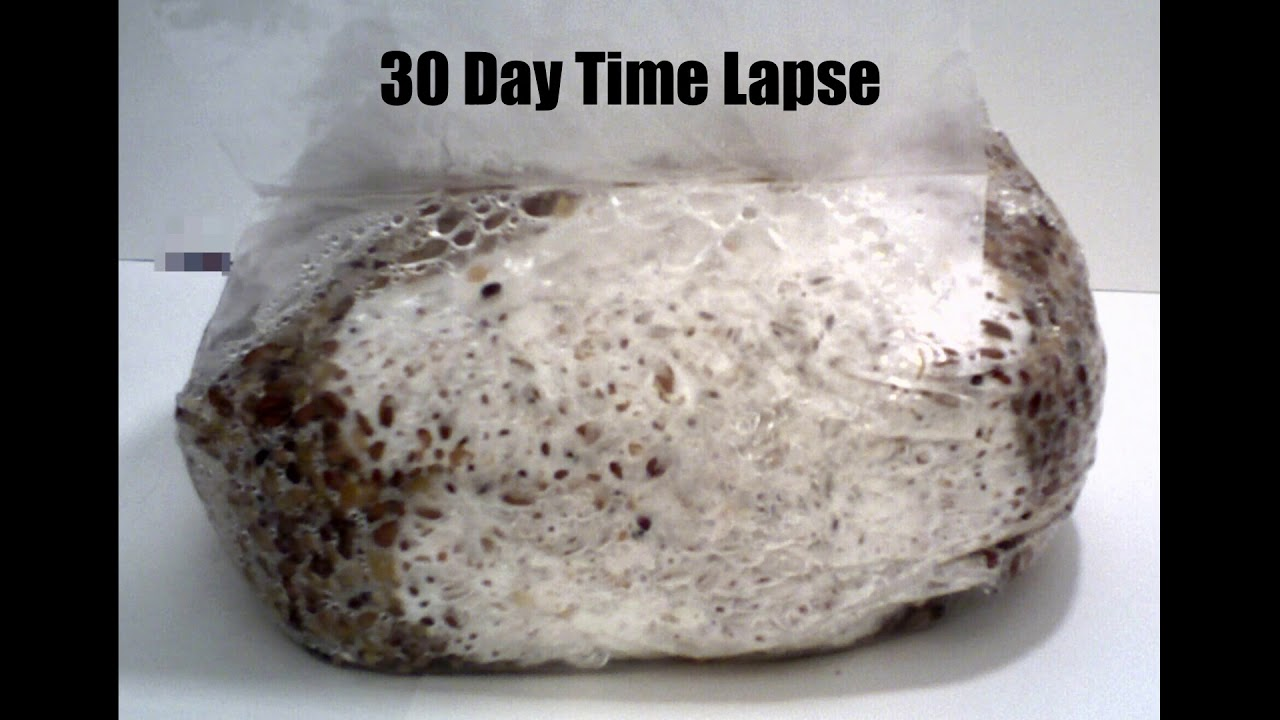 30 Day 5Grain Spawn Bag Time Lapse