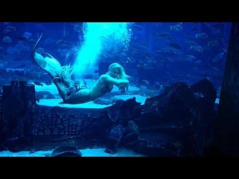 Real mermaid swimming underwater at Atlantis Palm Dubai ...