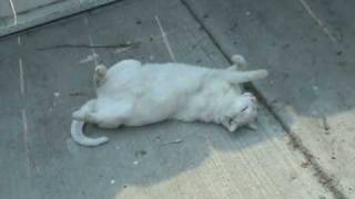 DEAD CAT SNOWY ????? Thumbnail