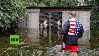 Huracán Florence: Rescatan a perros encerrados en sus jaulas inundadas de una perrera