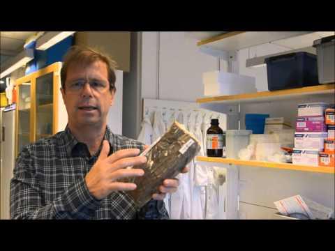Nils Högberg berättar om hussvampen