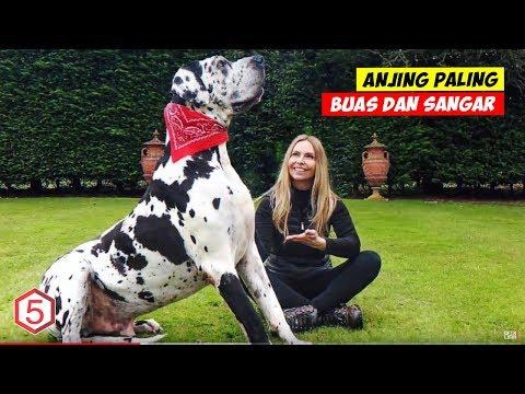 10 Anjing Paling Buas Dan Paling Ganas Yang Mesti Kalian Hindari